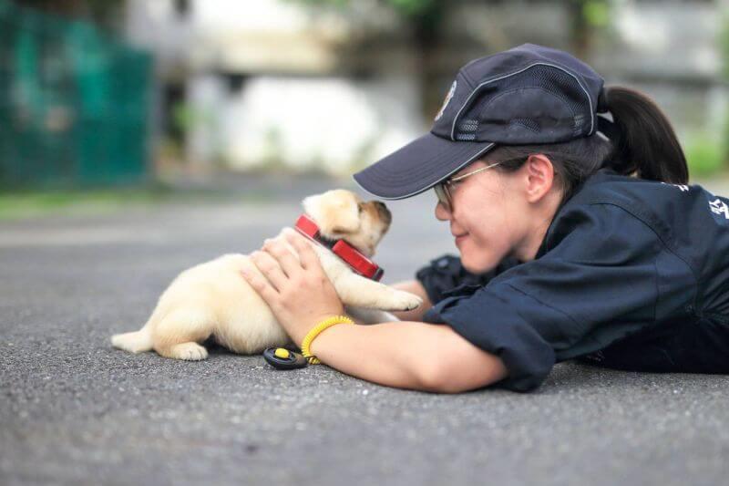 Taiwan police puppies