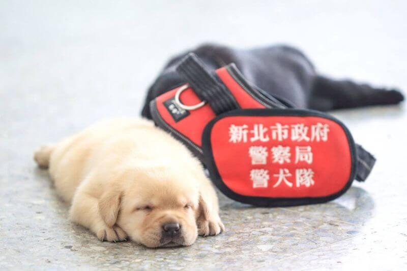 taiwan police dog