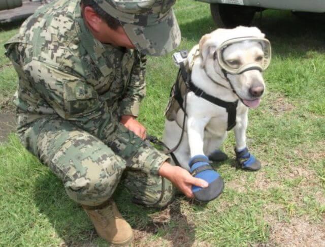 dog saves lives earthquake