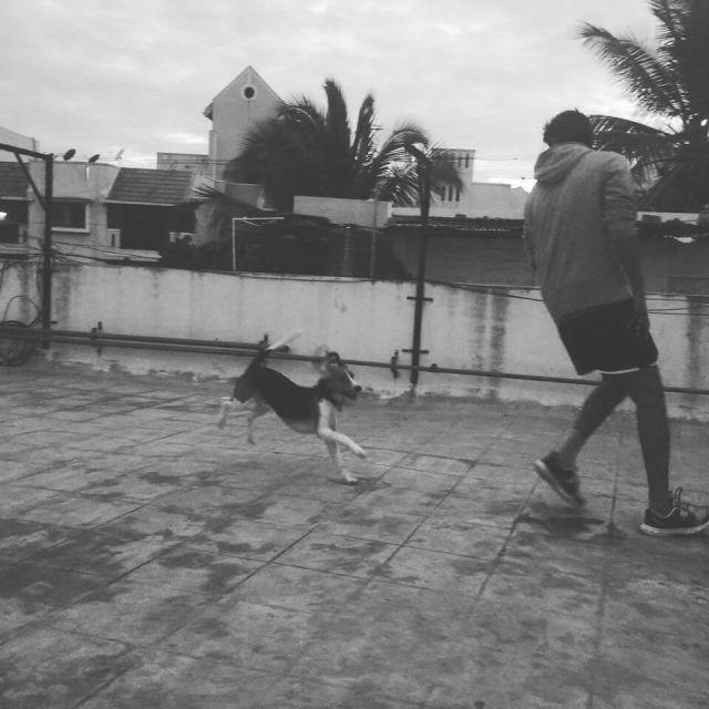 bengaluru adoption dog
