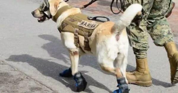 mexico earthquake dog