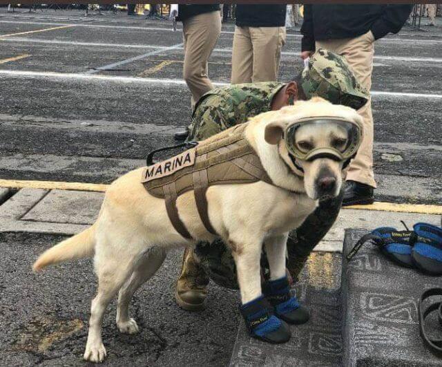 Mexico earthquake rescue dog