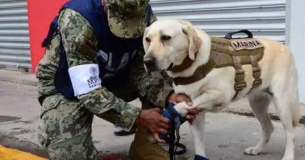 Rescue dog earthquake