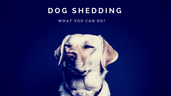 dog shedding tips