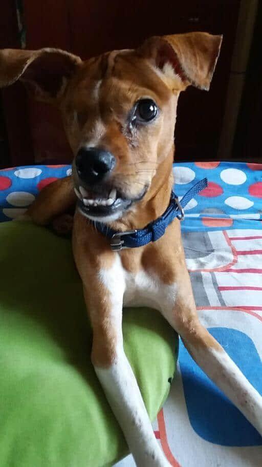 help one eye dog