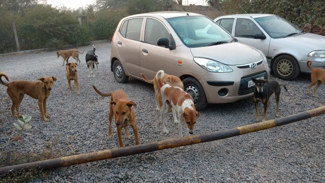 Friendly Community Dogs
