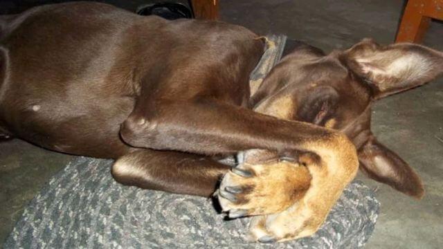 heartwarming dog tribute