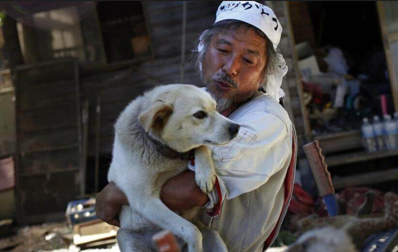 looking after dogs in the aftermath of disasters