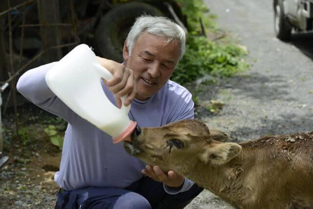 Japan dog lover