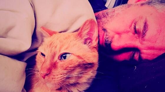 cat adoption story