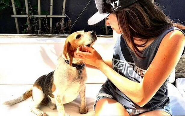Meghan Markle beagle