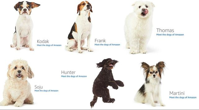 Amazon 404 page dogs