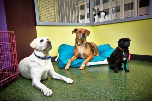 Salesforce dogs