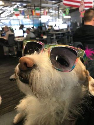 glassdoor dog