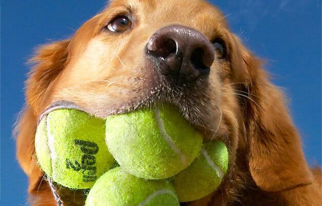 dog loves ball