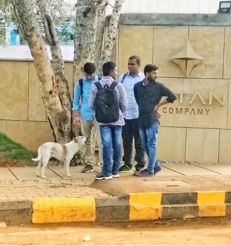 Bengaluru dog