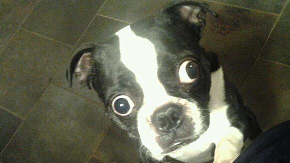 dog funny eyes