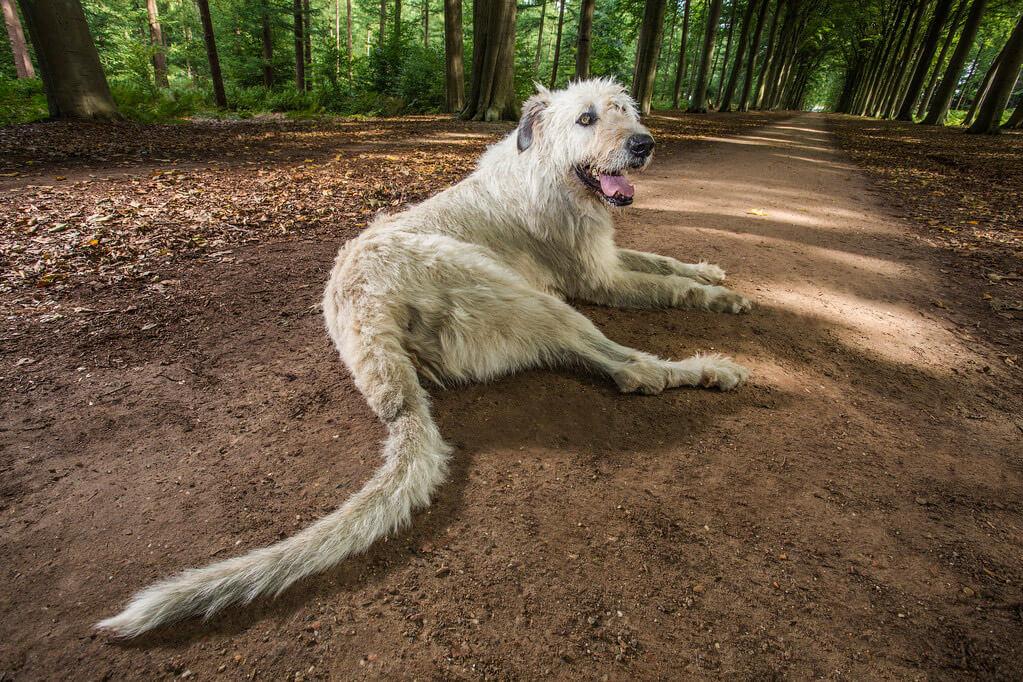 dog longest tail