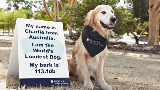 loudest bark record
