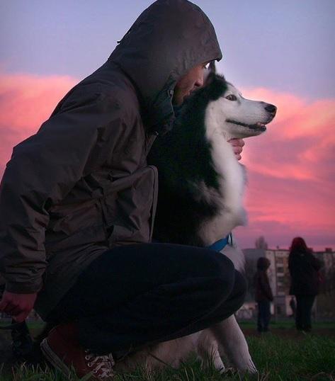 netflix syria dog