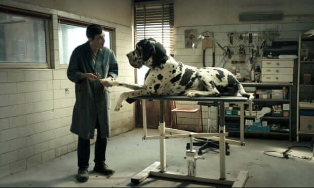 dogman italy