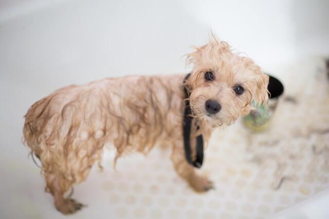DIY dog grooming