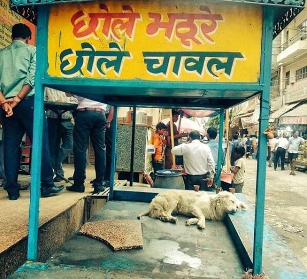 i am a dog in gurgaon