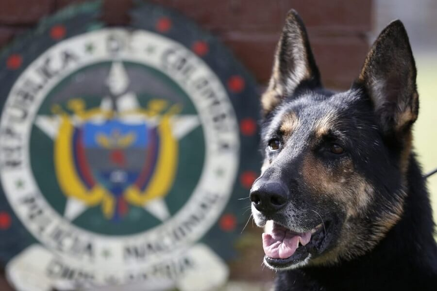 dogs with jobs - Colombia drug dog