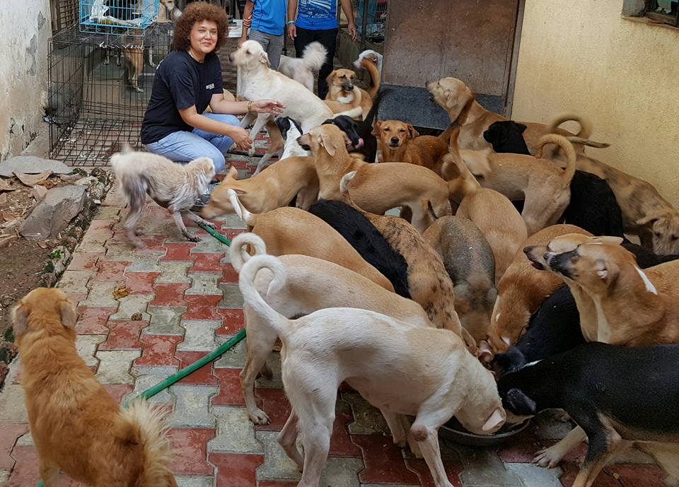 Pune animal shelters - Mission possible pune