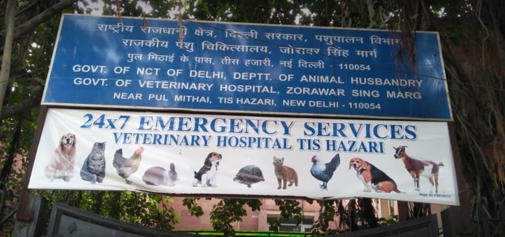 Tis Hazari Delhi 24*7 animal hospital