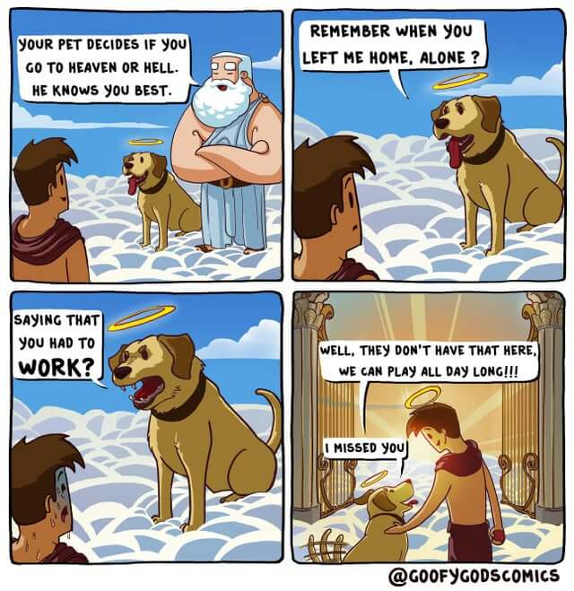dog meets human in heaven