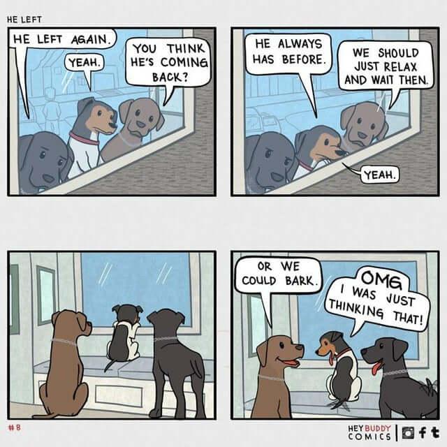 pets funny comic
