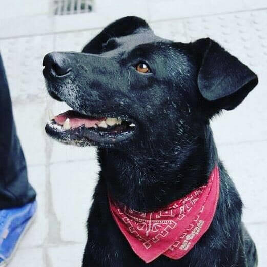 Chile revolution dog