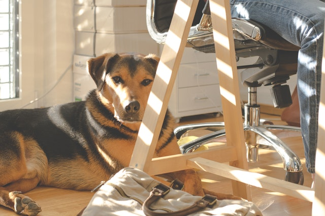 covid-19 pet care tips