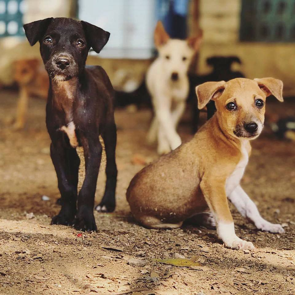 dog adoption in Hyderabad