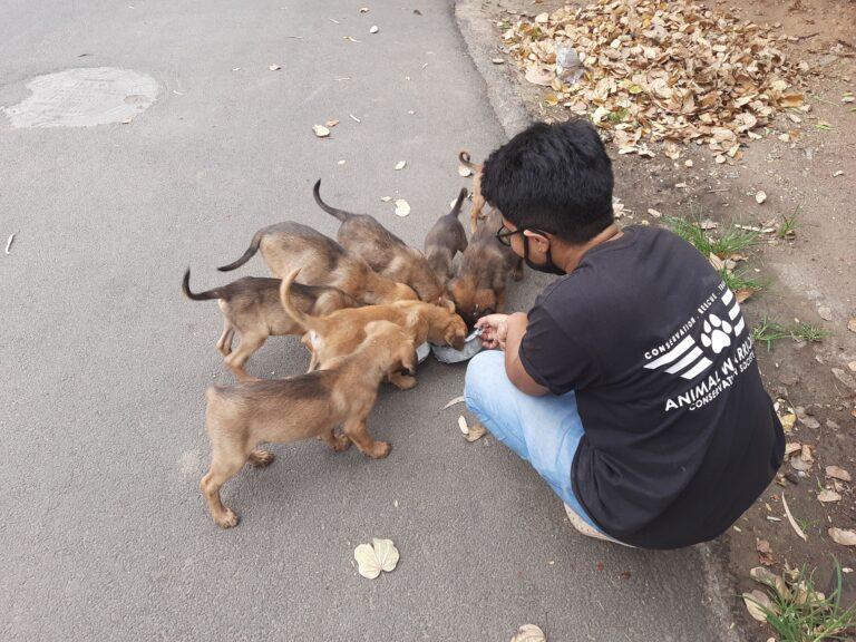 Hyderabad dog adoption