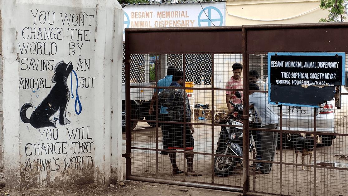 dog adoption in Chennai