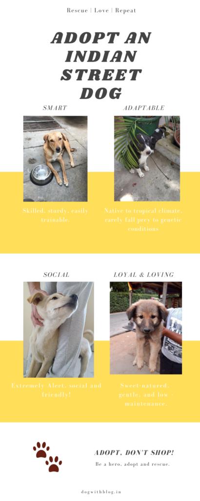 adopt indian pariah dog stray dog India