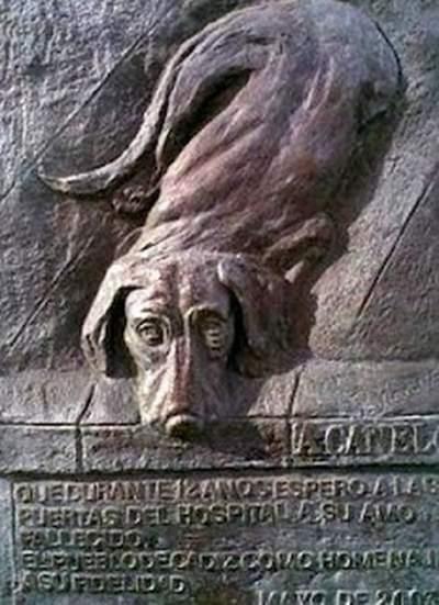 Canelo dog