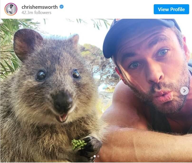 Chris Hemsworth quokka selfie