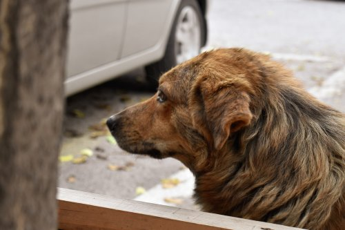 stray dog protection laws in india