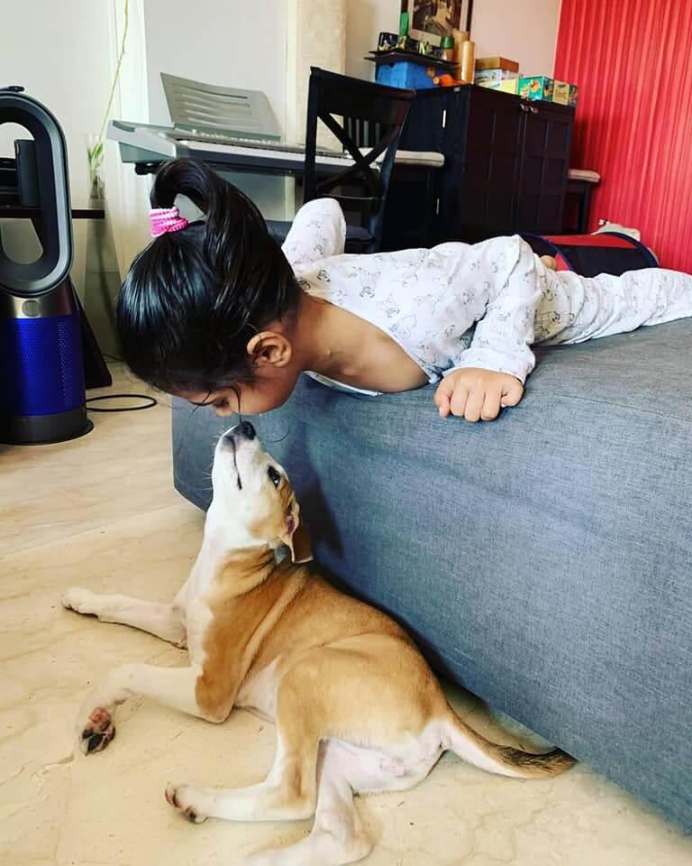 adopt an indie dog