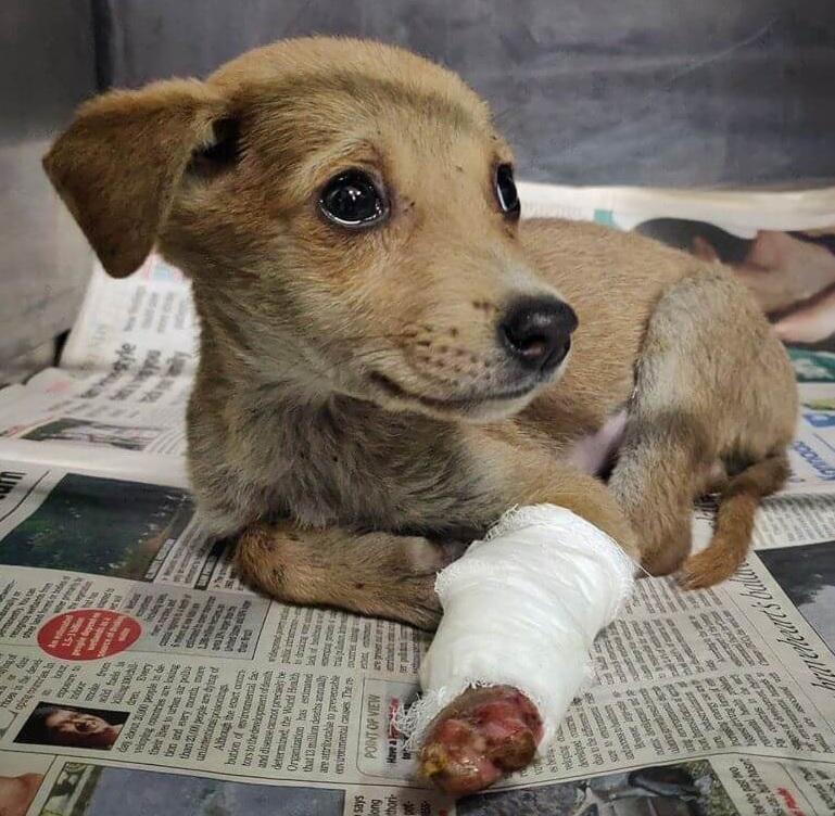 Pune dog shelter