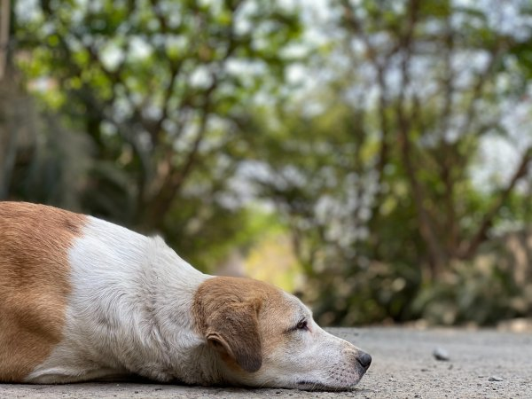 India animal protection laws