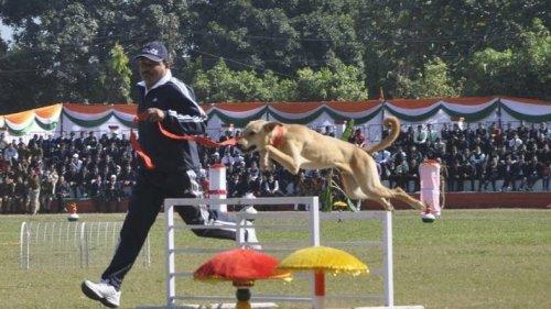 Uttarakhand police stray dog