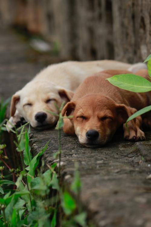 Bangalore animal helpline