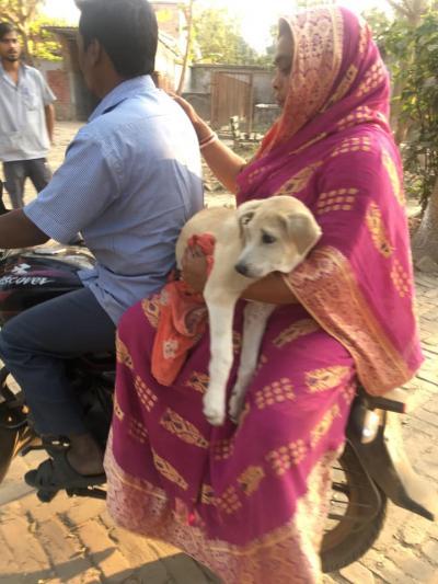 dog adoption in Kolkata