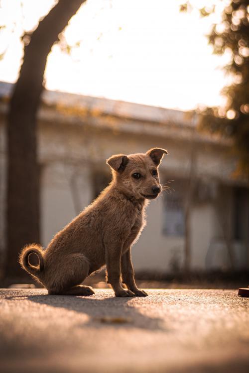 animal shelter in Kolkata