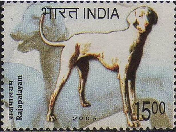 Rajapalayam dog stamp