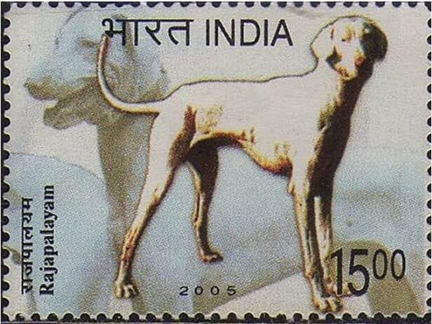 Rajapalayam dog stamp